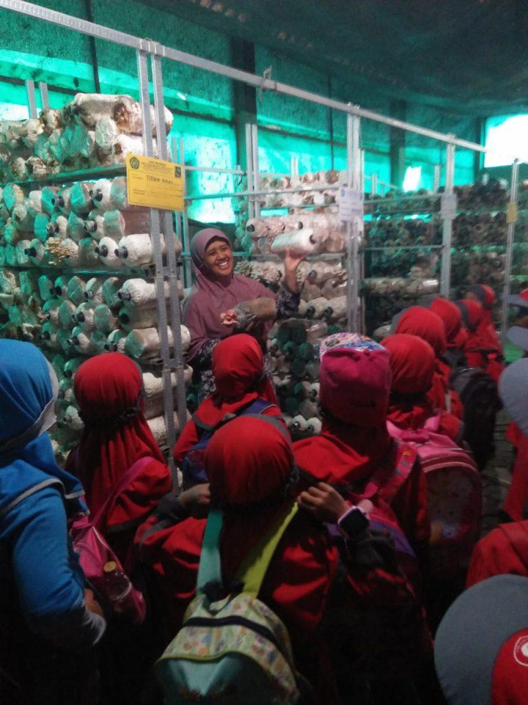 Kunjungi Fish Edu Park UMM, Puluhan Siswa TK Islam Al Asy'ari Batu Tertarik Aquaponik 2