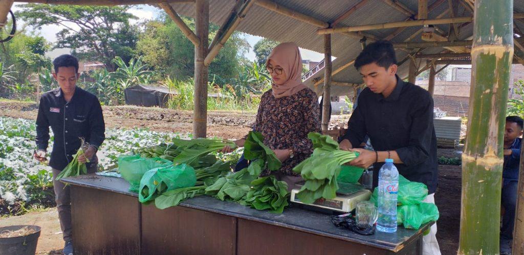 Sayur Sehat Prodi Agribisnis UMM , Sarana Produksi dan Edukasi 2