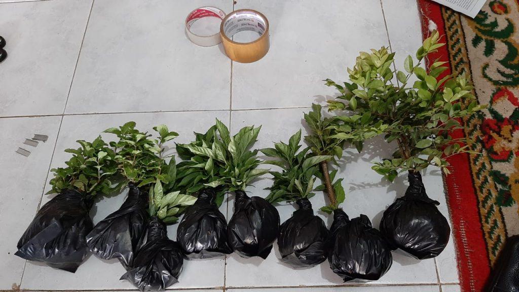 Shaila Mahasiswa Prodi Agribinis UMM, Kuliah Sambil Bisnis Tanaman Floris 2