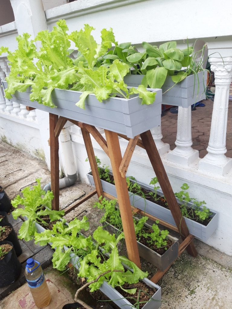 Pengabdian Pertanian Perkotaan Dosen Agribinis UMM, Ajak Ibu-Ibu Mojolangu Tanam Sayur Vertikultur 2