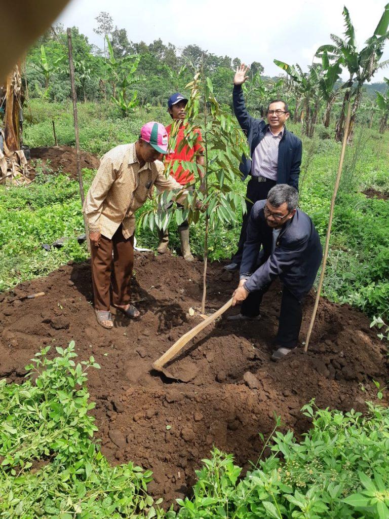 MEK PDM Kabupaten Malang-PCM Lawang, Tanam Ratusan Pohon Buah Proyeksi Wisata Petik Durian 2
