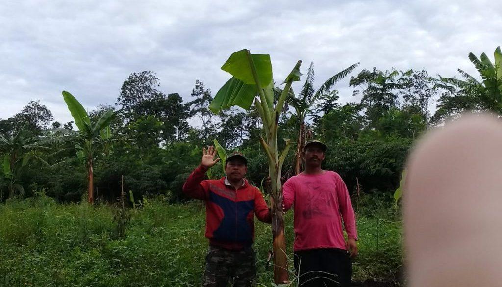 mek kab pisang (3)