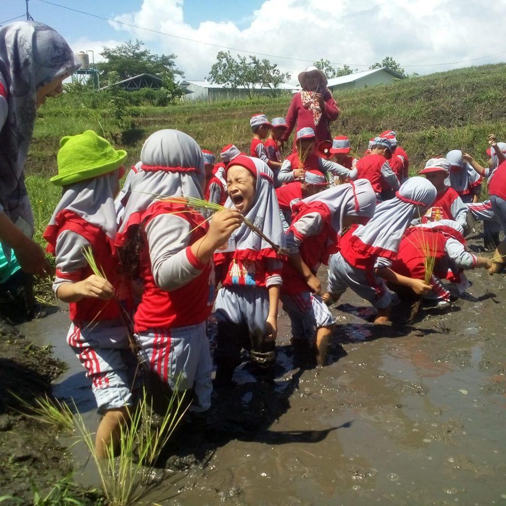 Outdoor Learning ABA 2 Kota Malang, Kunjungi BPTP Karangploso Kenalkan Pertanian-Peternakan 1