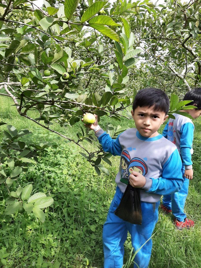 Kunjungi Agro Wisata, ABA 5 Batu Buka Wawasan Siswa Sekaligus Stimuli Kecerdasan Diri 2