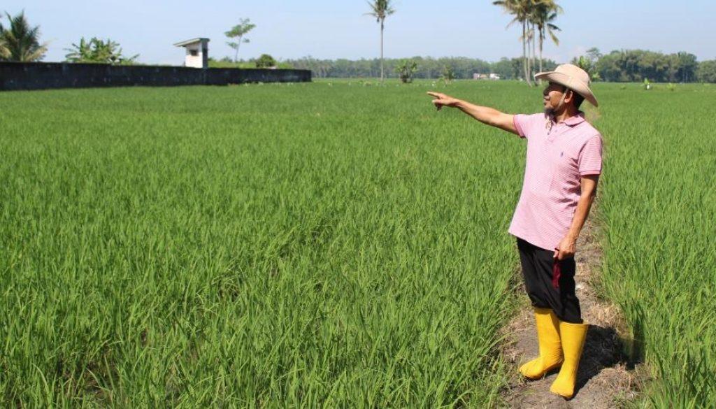HARIYADI PKPOT padi impor ccc