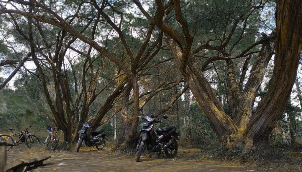 hutan lambau aaa
