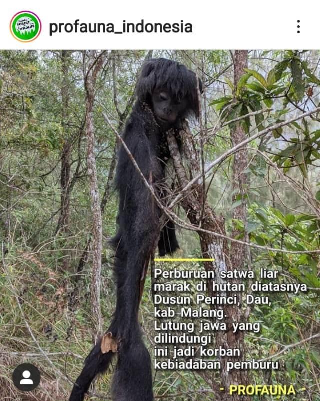 Pro Fauna Temukan Lutung Jawa Dijerat, Diikat, Dikuliti 1