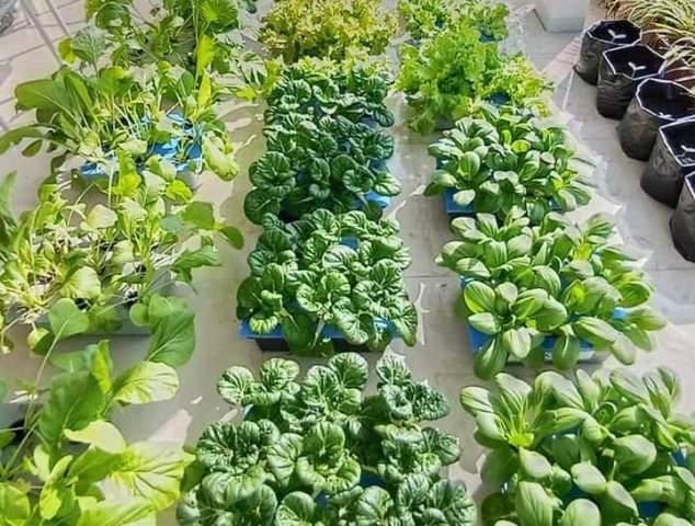 Datangkan Ahli Hidroponik PDA Kota Malang Latih Life Skill Urban Farming 1