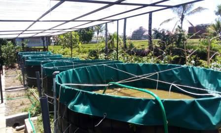 Kembangkan Desa Parangargo, PPDM UMM Budidaya Ikan Sistem Solar Cell- Biona 1